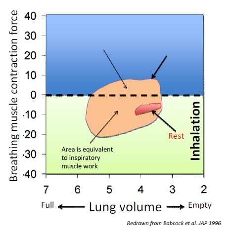 Changes in breathing muscle contraction force and the resulting changes in lung volume at rest